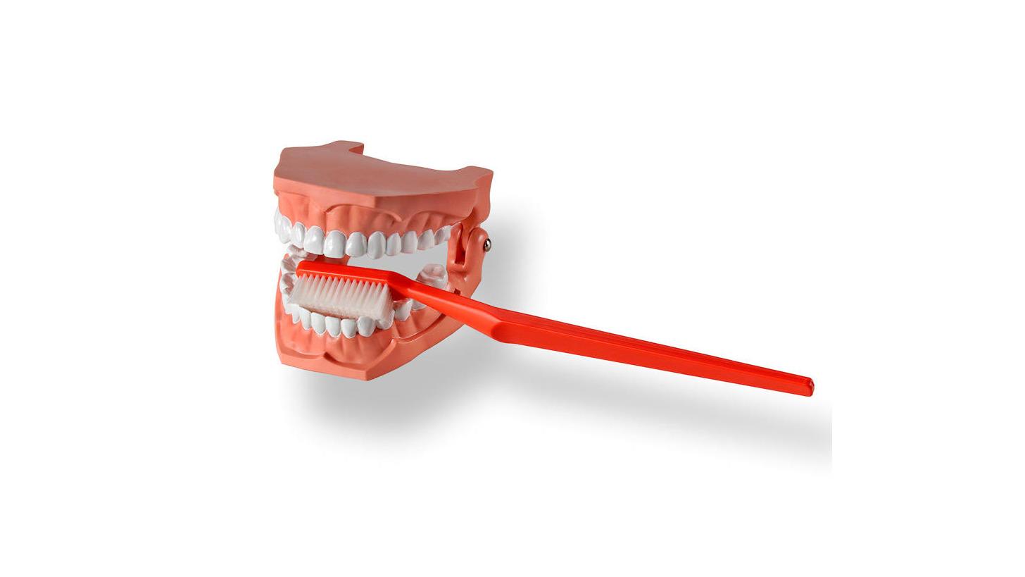 Logo Zahnpflegemodell mit Riesenzahnbürste