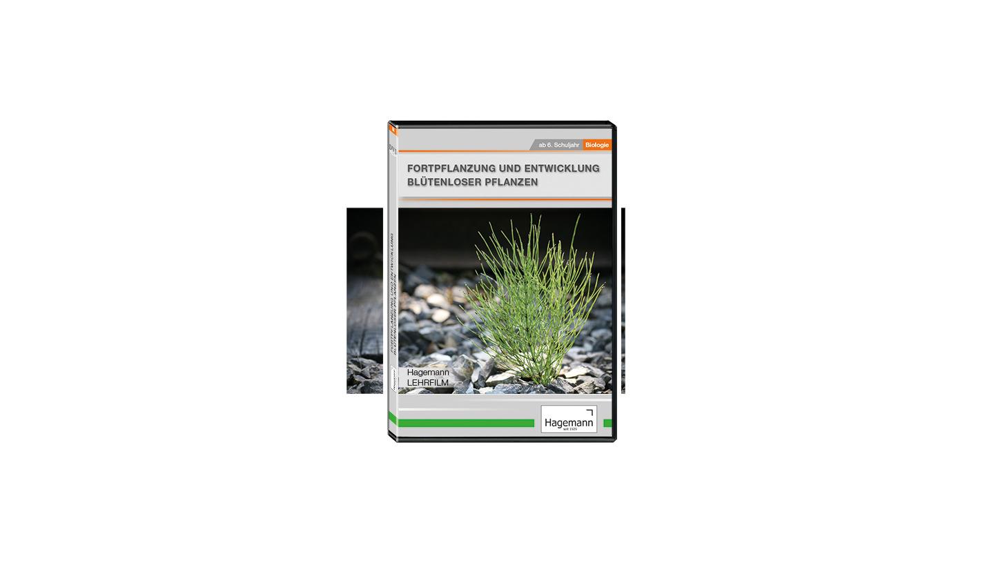 Logo Entwicklung blütenloser Pflanzen