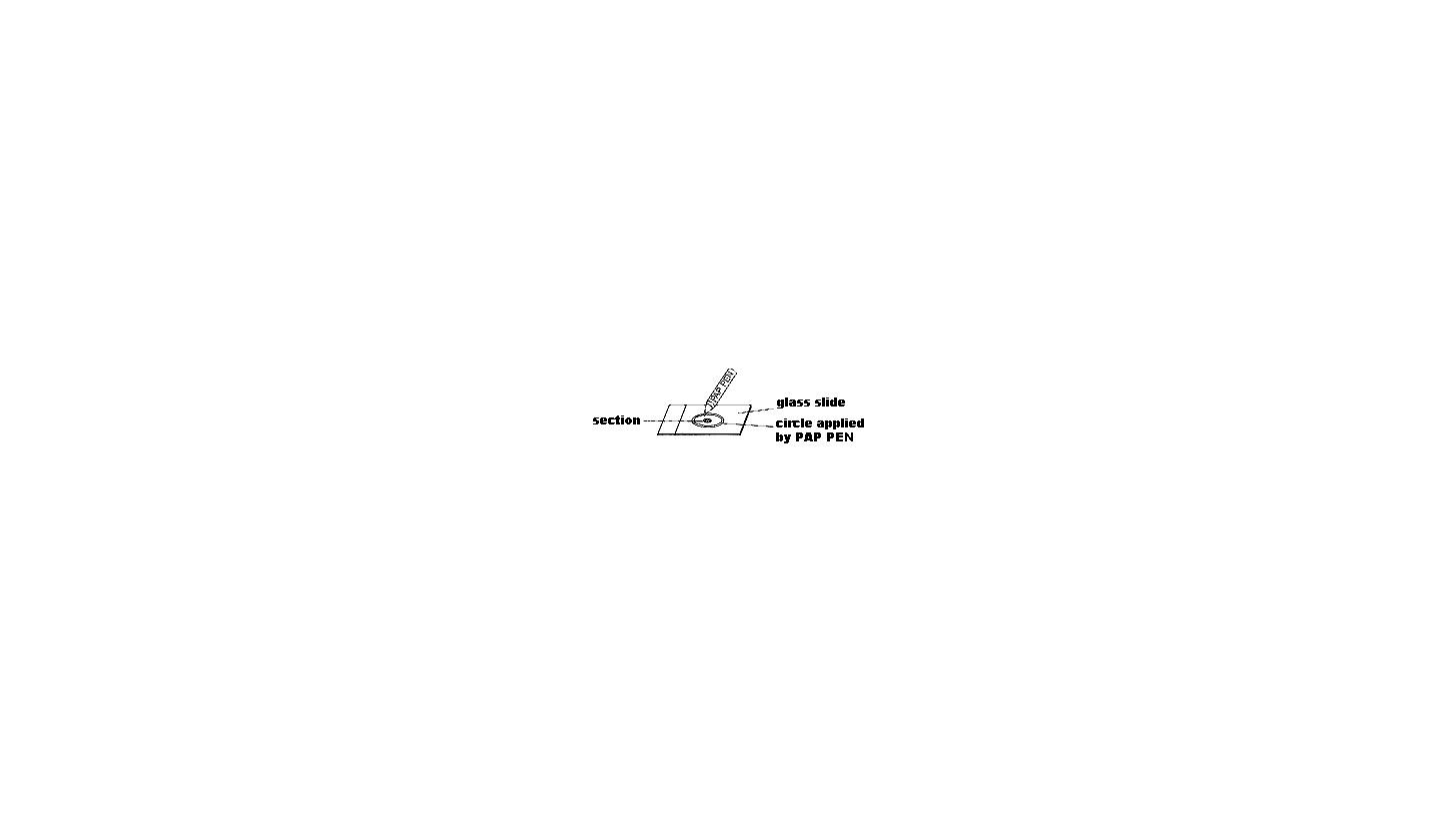 Logo Nylonwolle, PAP-PEN und Histologie