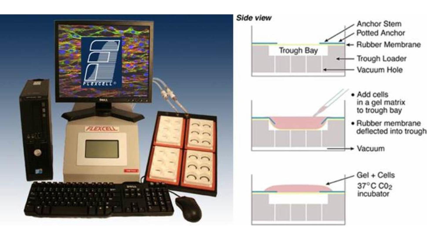 Logo Tissue Train® Biomechanic System